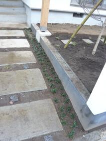 2008-4-13植栽blog2.jpg